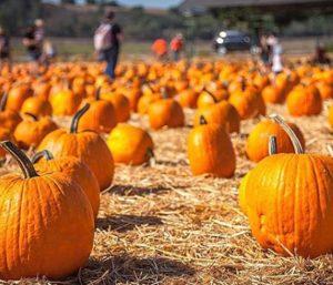 Simi Valley Underwood Farms Fall Festival